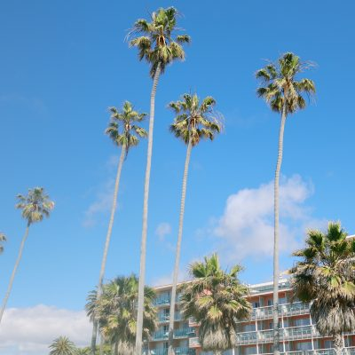 Guide to a Weekend in San Diego